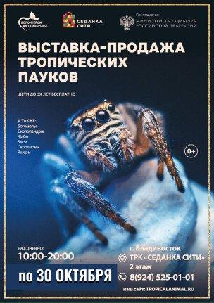 Выставка-продажа тропических пауков